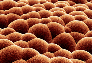 Diagram of Cells on the Surface of Human Skin